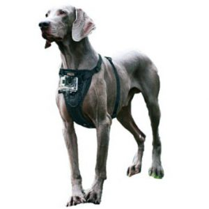 Arnés elegante de perro Kurgo Tru-Fit con montaje en cámara, medio, negro